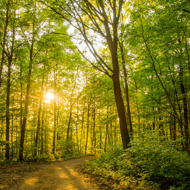 """Golden Forest"" stock image"