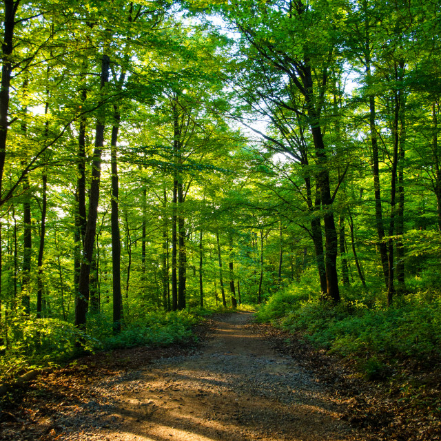 """Green Forest"" stock image"