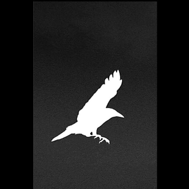 """White Crow"" stock image"