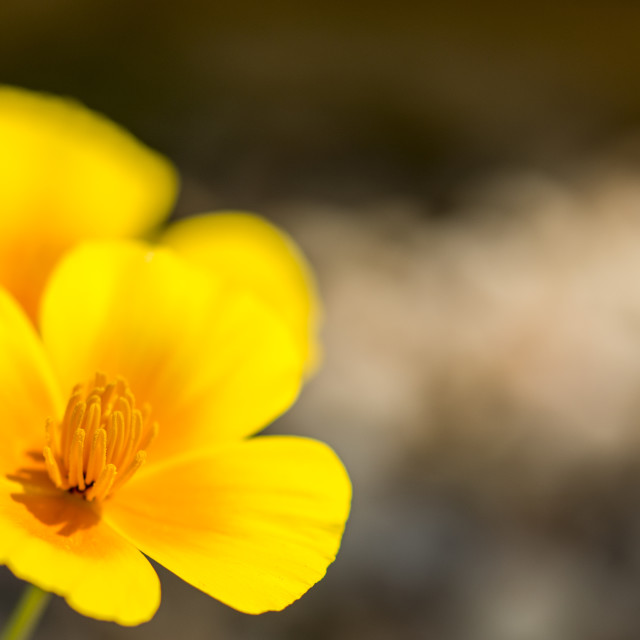 """""""Vibrant yellow flower with copy space"""" stock image"""