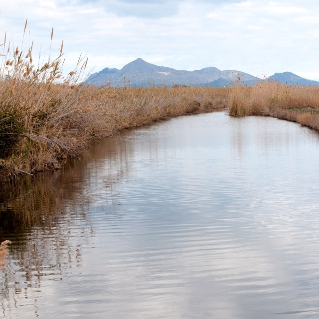 """Water surface and reeds in Albufera wetlands, Majorca."" stock image"