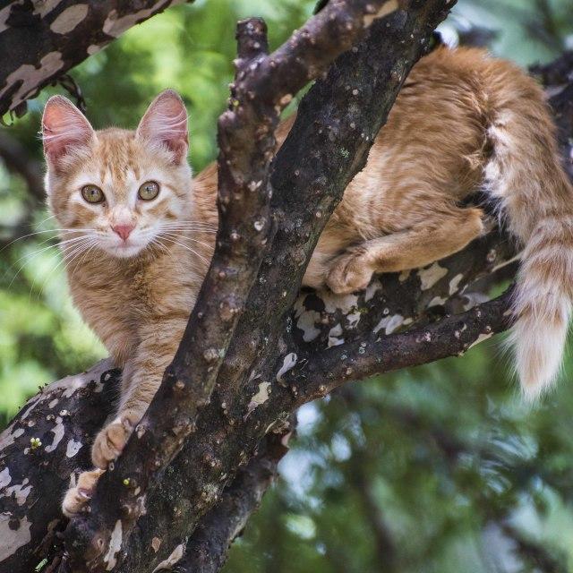 """""""Hakuna Matata - wild cat"""" stock image"""