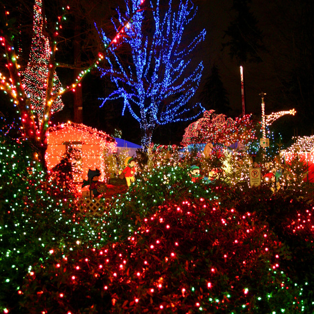 """""""Bright Nights in Stanley Park"""" stock image"""