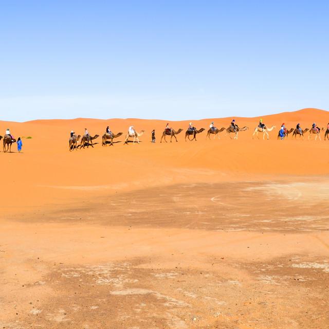"""Camel caravan"" stock image"