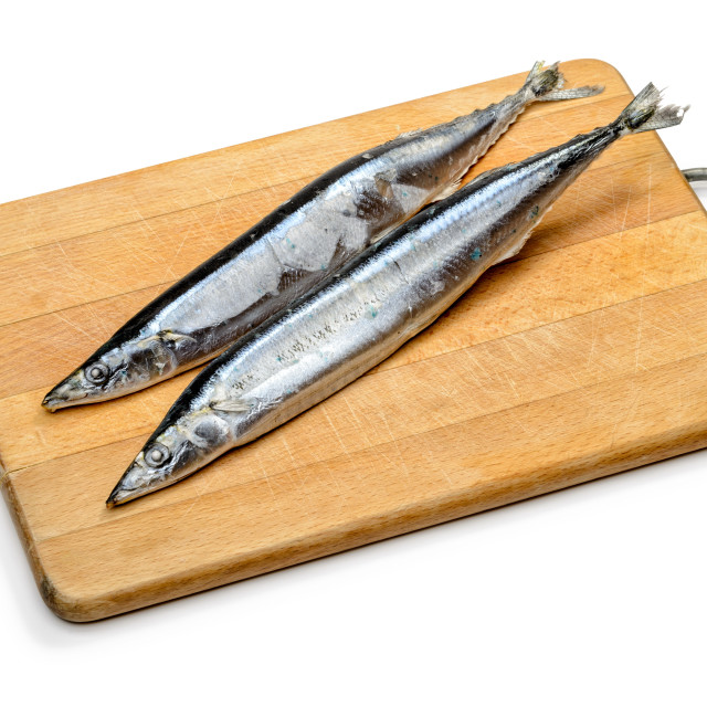"""Pacific Saury"" stock image"
