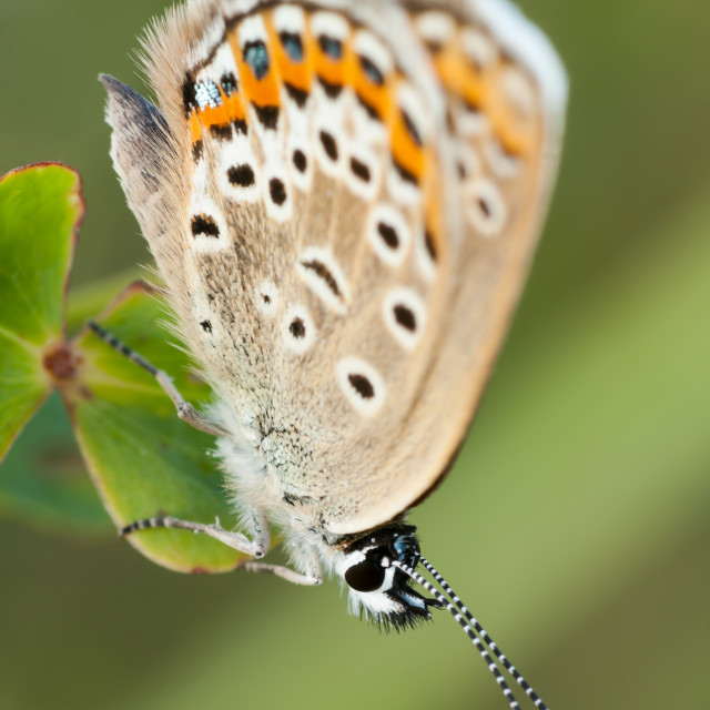 """""""Butterfly"""" stock image"""