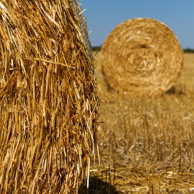 """Straw bales"" stock image"