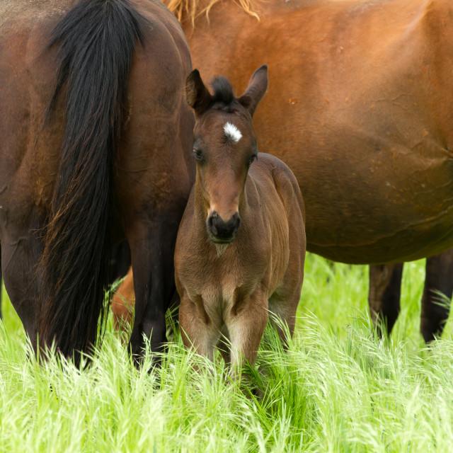 """Horse family"" stock image"
