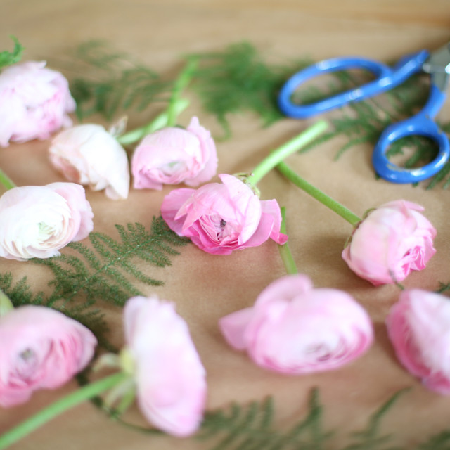"""Ranunculus Flowers"" stock image"