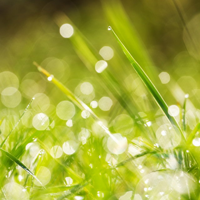 """Green grass"" stock image"