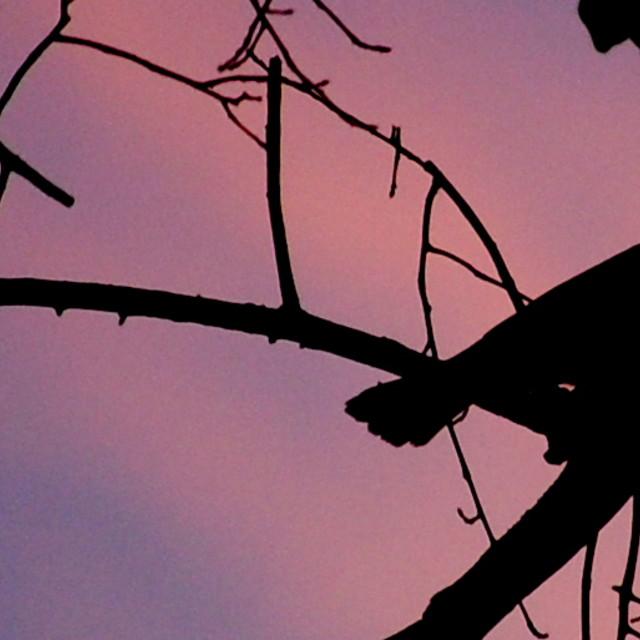 """""""Silhouette Bird"""" stock image"""