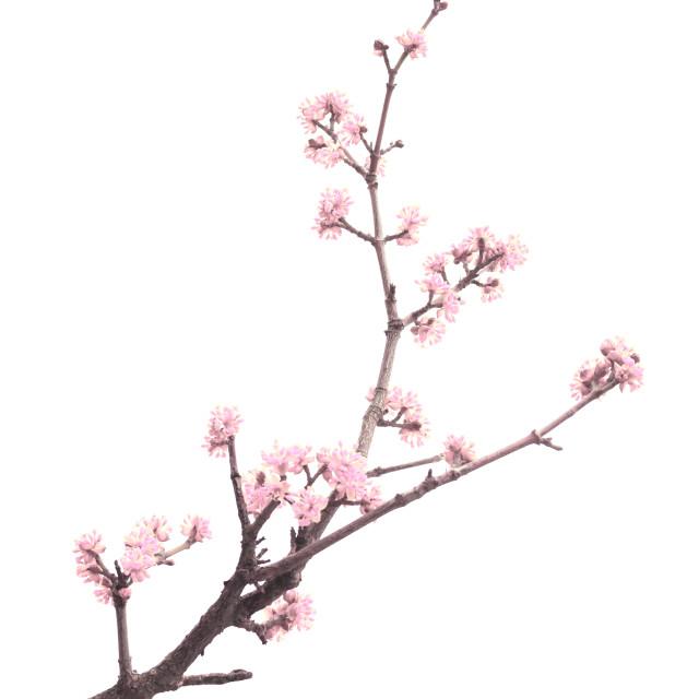 """Spring tree detail"" stock image"
