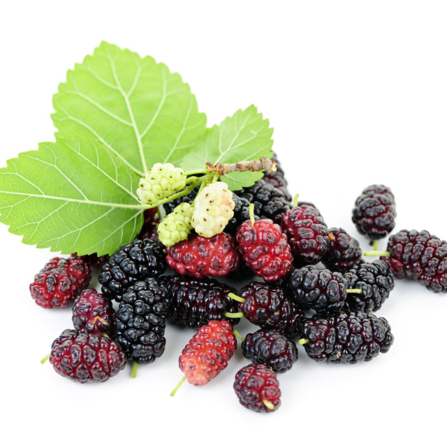 """Fresh mulberries with leaves"" stock image"