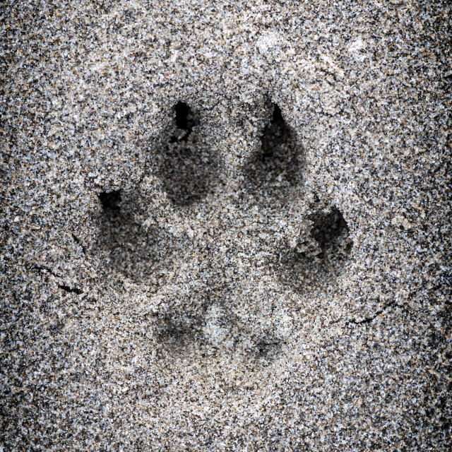 """""""Paw print in sand"""" stock image"""