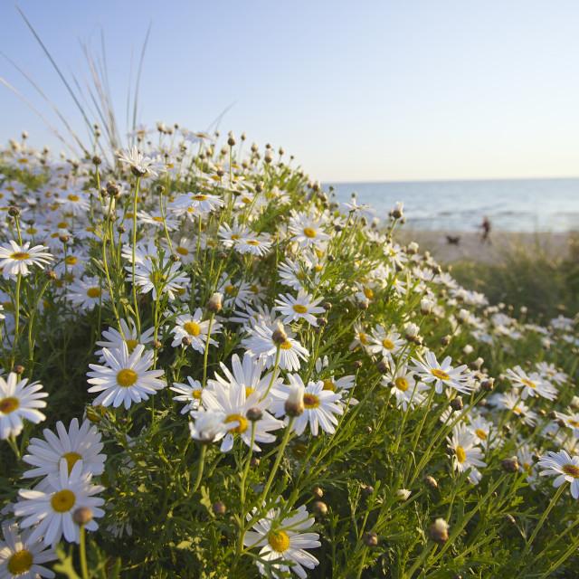 """Spring Flowers"" stock image"