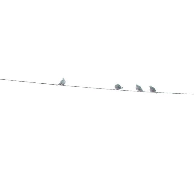 """""""Telephone line birds"""" stock image"""