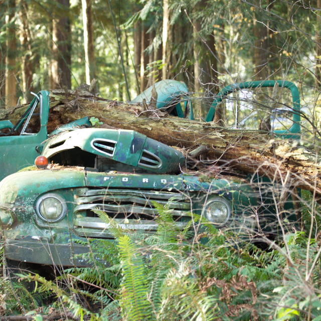 """""""Ford in the Forest"""" stock image"""