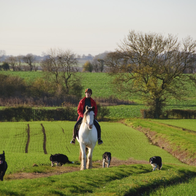 """Autumn riding with dogs"" stock image"