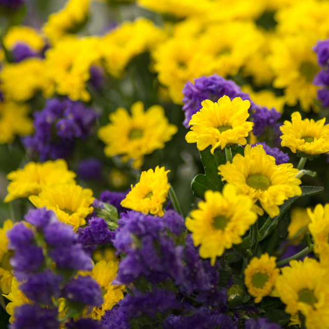 """""""bouquet of yellow and violet flowers"""" stock image"""
