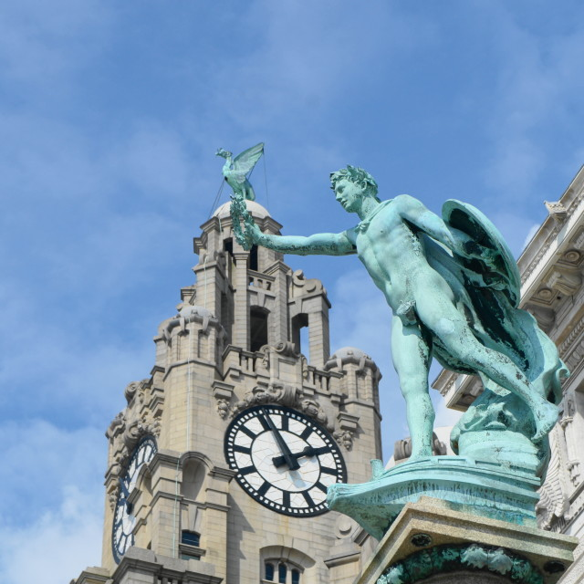 """Liver Bird Perch"" stock image"
