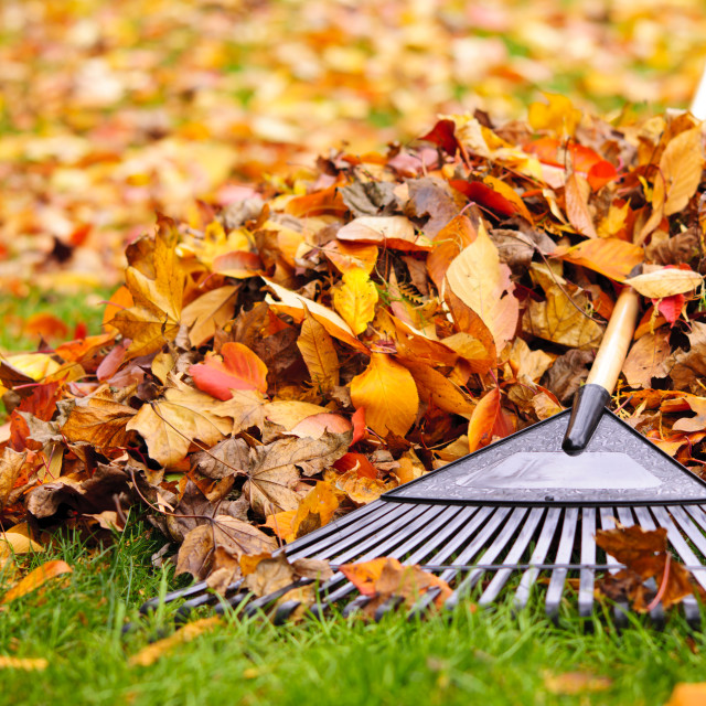 """Fall leaves with rake"" stock image"