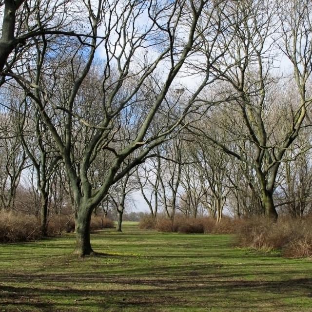 """""""Spring scene in a park"""" stock image"""