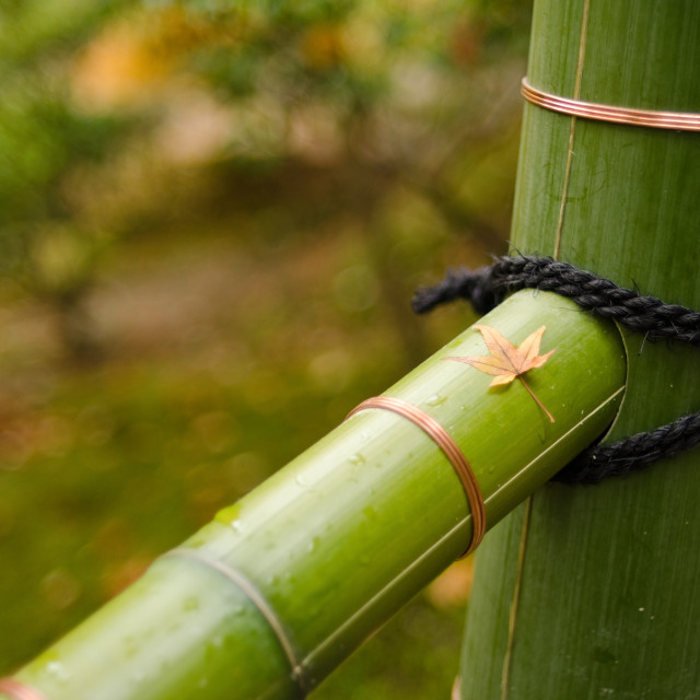 """""""Japanese fence with leave"""" stock image"""