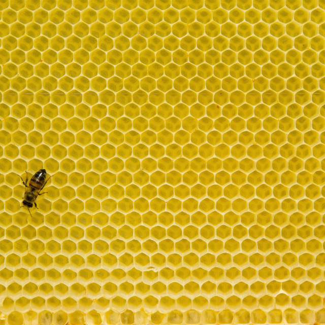 """Honeycomb pattern with bee"" stock image"