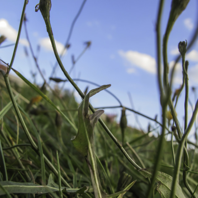 """Detail of a natural meadow"" stock image"
