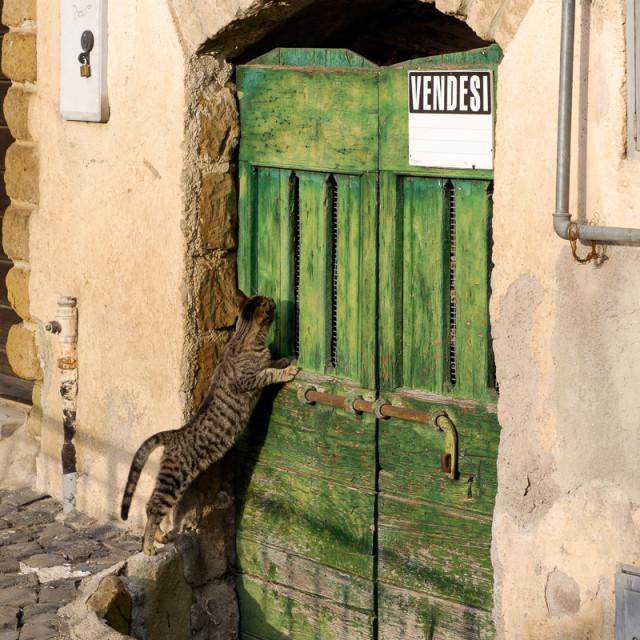"""""""Inquisitive Italian Cat"""" stock image"""
