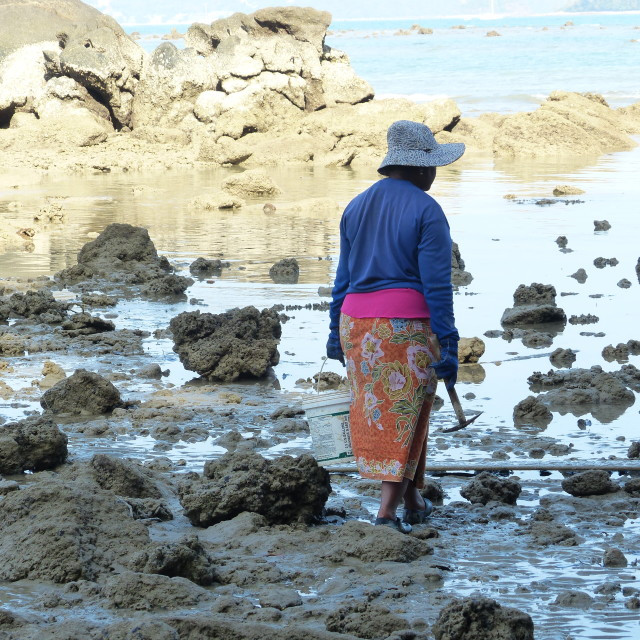 """Cockle picker at low tide"" stock image"