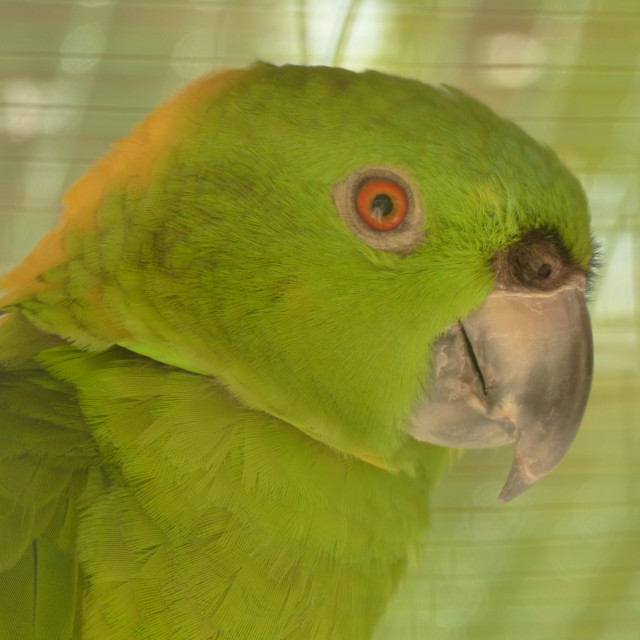 """Green Parrot"" stock image"
