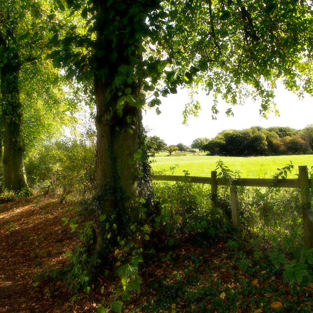 """Country lane and fields"" stock image"