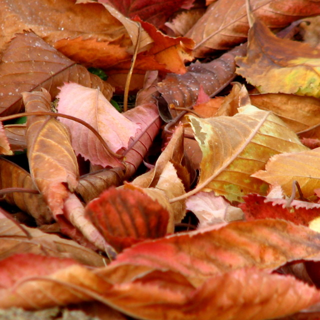 """Dead leaves"" stock image"