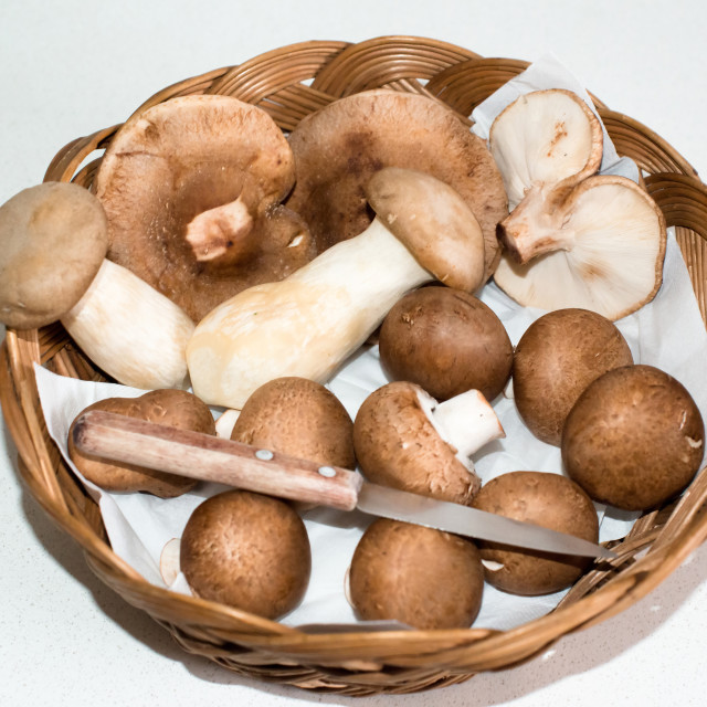 """Collected Mushrooms"" stock image"
