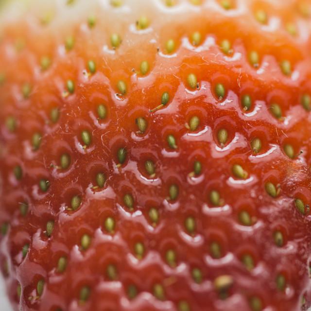 """A Strawberry Fruit Macro Shot"" stock image"