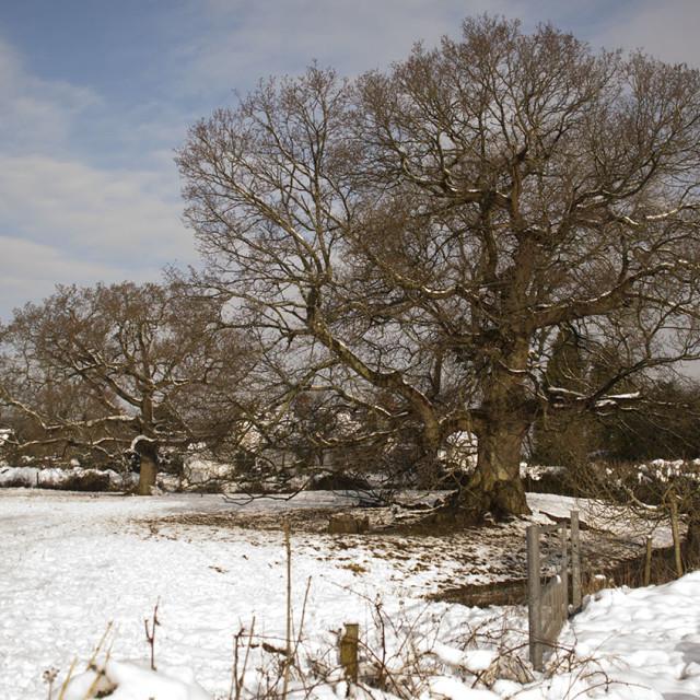 """Winter Tree"" stock image"