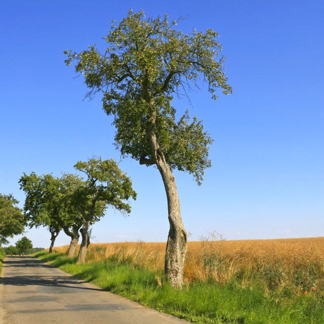 """Beautiful Country Road"" stock image"