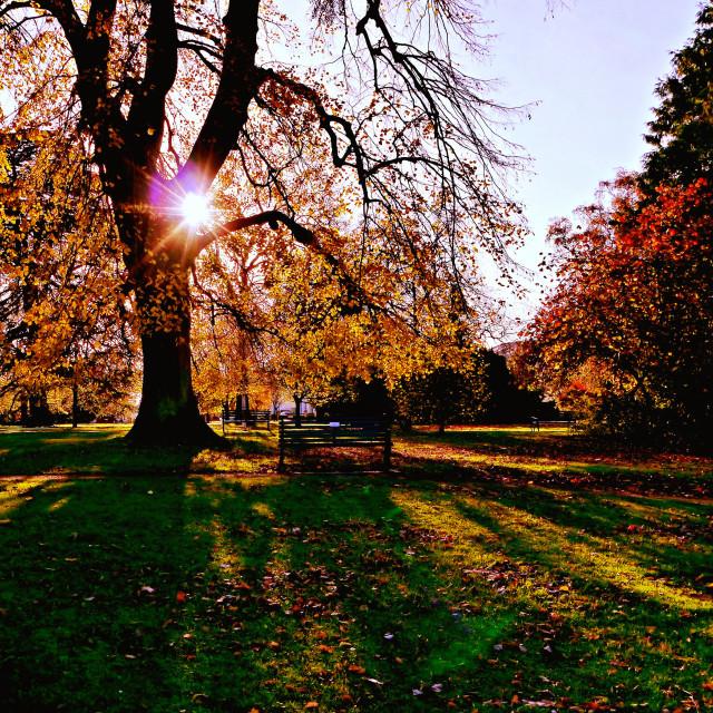 """""""Autumn shadows"""" stock image"""