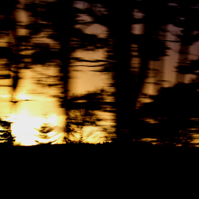 """Blurred Trees"" stock image"