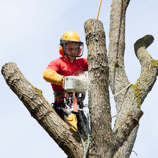 """""""An arborist cutting a tree with a chainsaw"""" stock image"""
