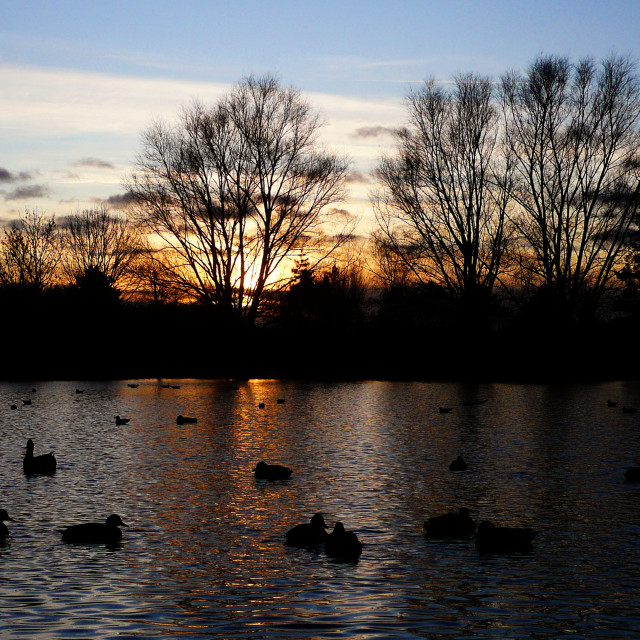 """Waterfowl Sunset"" stock image"