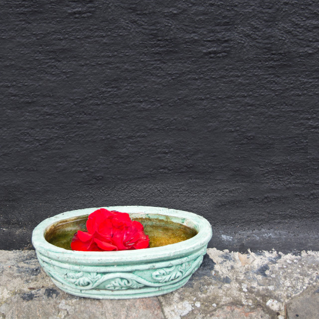"""""""Green bowl with red flower"""" stock image"""