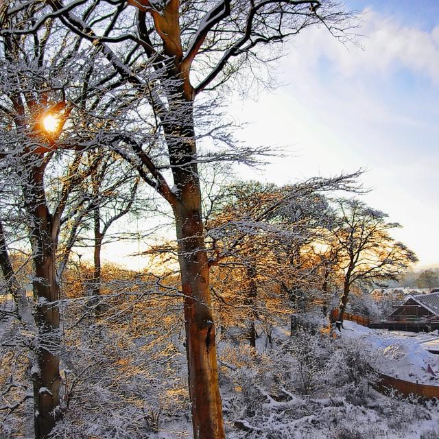 """winter wonder"" stock image"