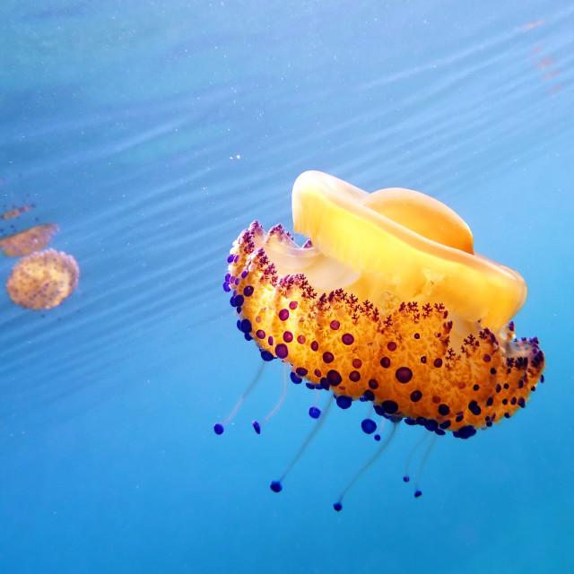 """""""dancing underwater"""" stock image"""