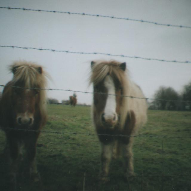 """Horses"" stock image"