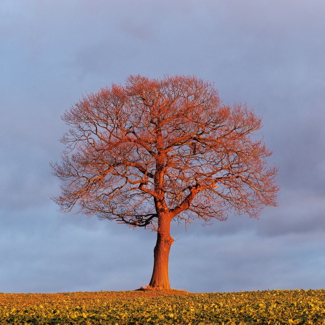 """The Tree"" stock image"
