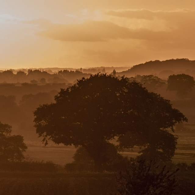 """Sunset through sillouhettes of trees & hedgerows"" stock image"
