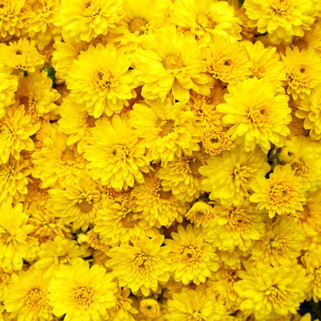 """vibrant yellow A"" stock image"