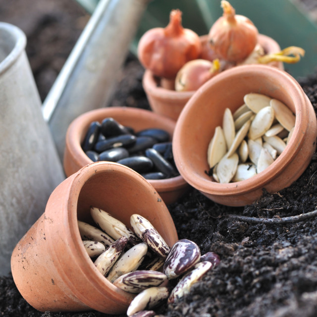 """seeds in pots to sowing"" stock image"